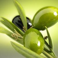 Поводы употребления в пищу оливкового масла