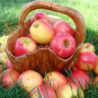 Яблоки на страже здоровья