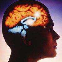 Три заблуждения о человеческом мозге